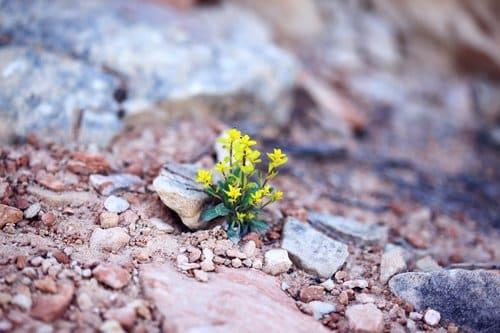 weeds in gravel sprouting through rocks