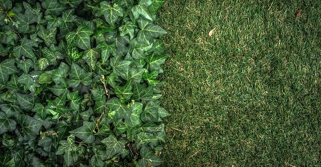 cheap grass alternatives