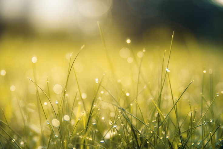 wet brown grass