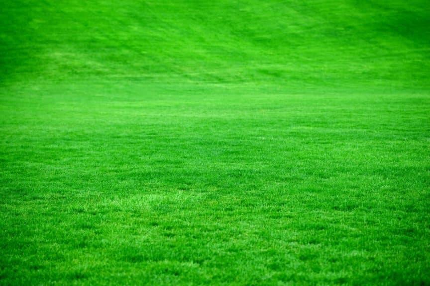 large green grass yard