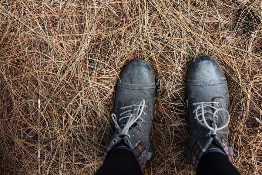 dead grass after winter