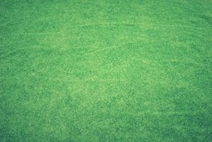 artificial grass landscaping for dogs