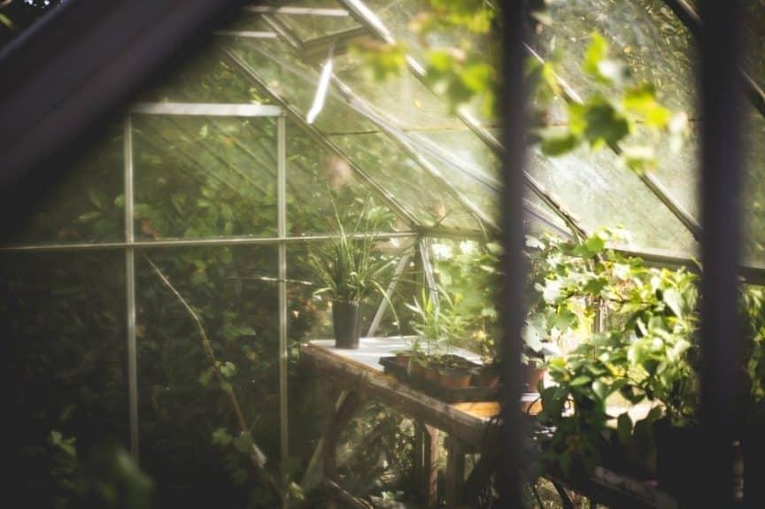 how often to water seedlings