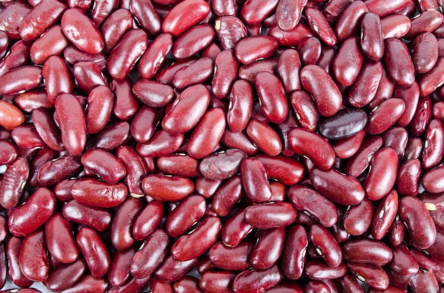 grow beans for survival