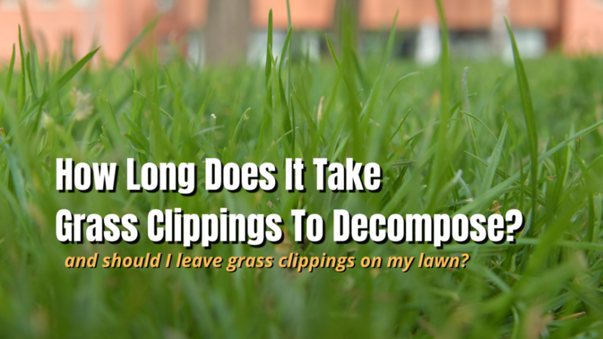 grass clippings to decompose time