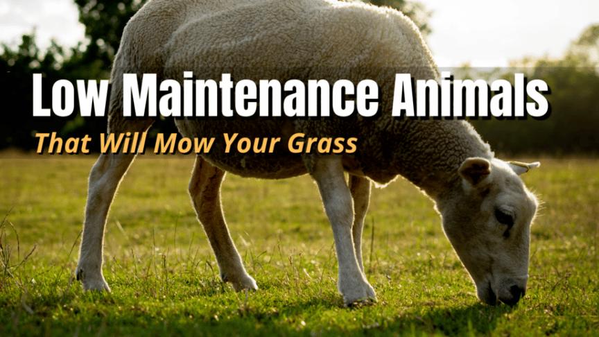 grazing grass animals