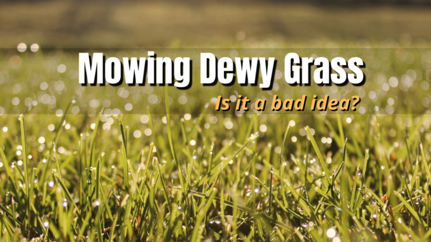 can you mow dewy grass
