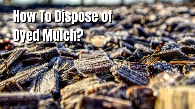 how to dispose dyed mulch