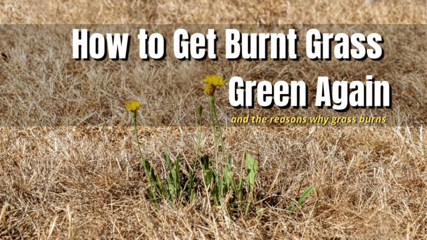 get burnt grass green
