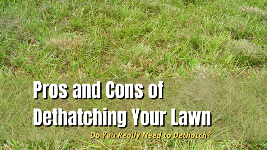 dethatching pros and cons