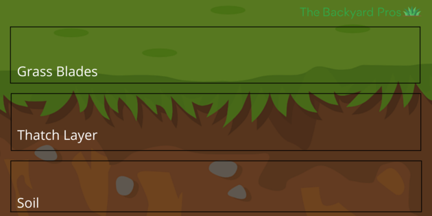 thatch layer location