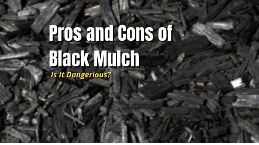 pros cons black mulch