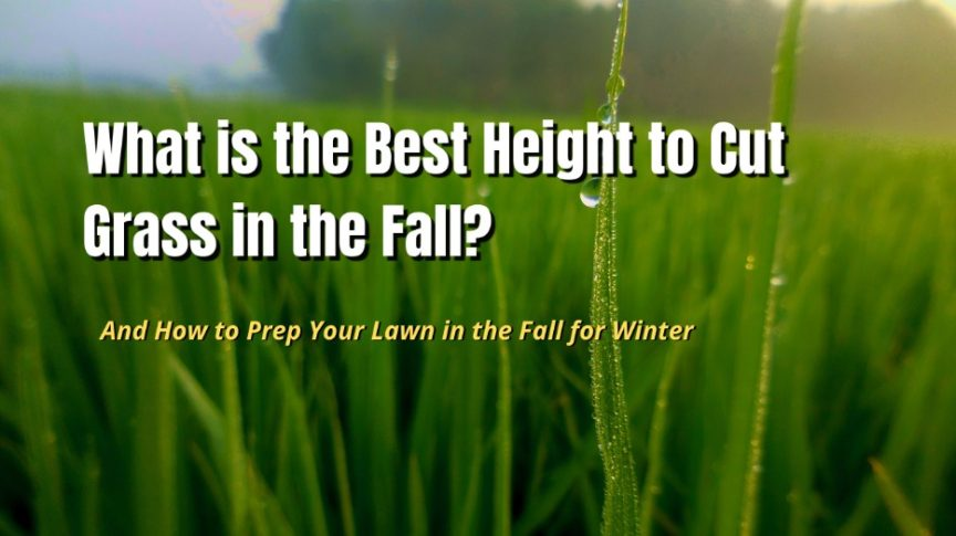 best height to cut grass in fall