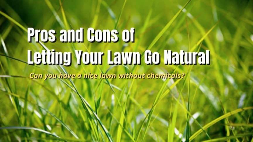 natural lawn