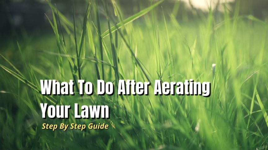 what to do after aerating lawn