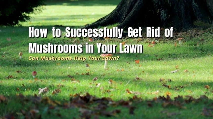 get rid of mushrooms in yard