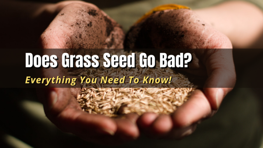 does grass seed go bad