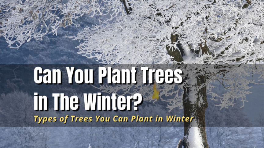 can you plant trees in the winter