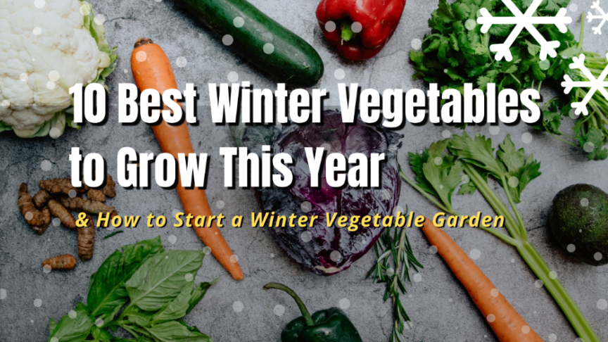 grow winter vegetables
