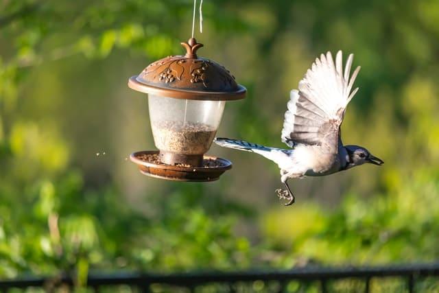 bird feeder option