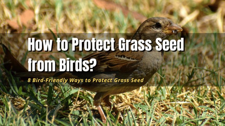 birds eating grass seed