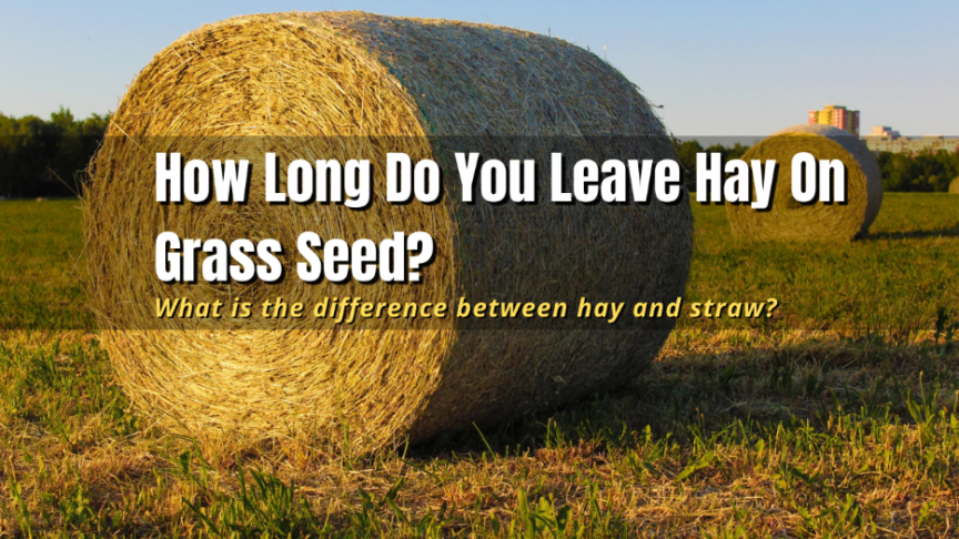 hay on grass seed