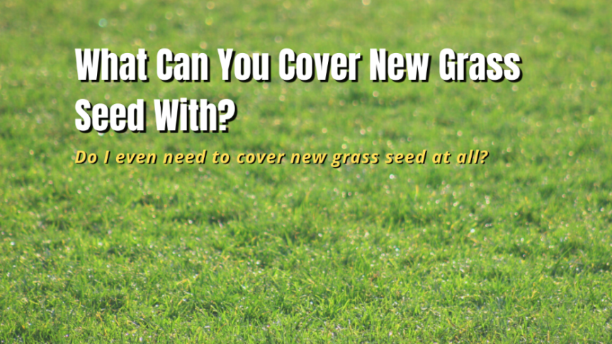 cover new grass seed with