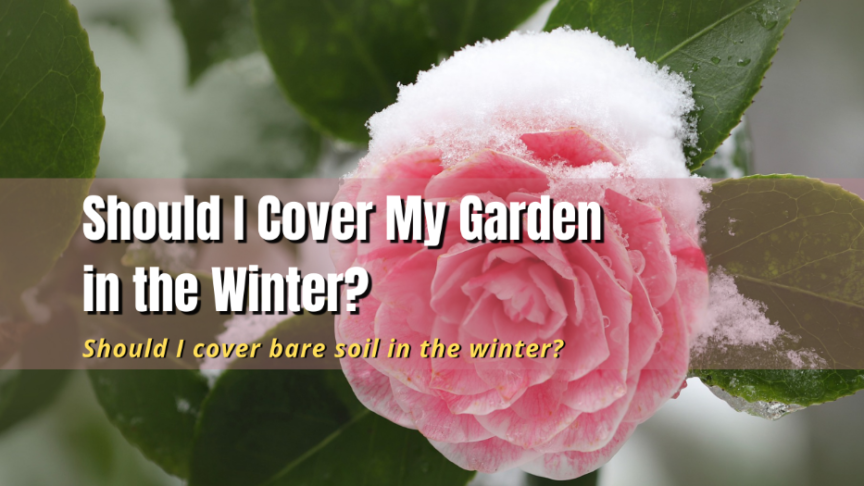Should I Cover My Garden in the Winter?