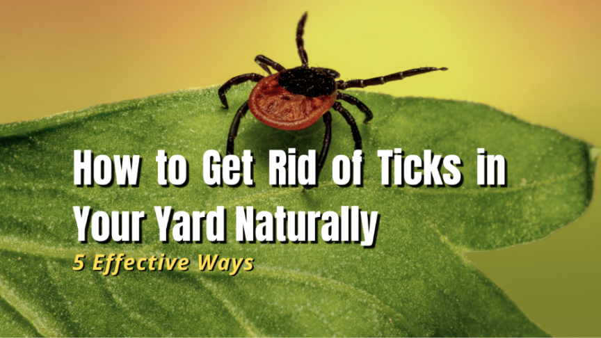 naturally remove ticks from yard