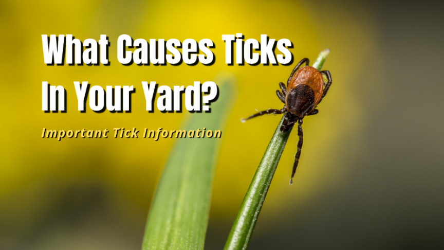 what causes ticks in yard