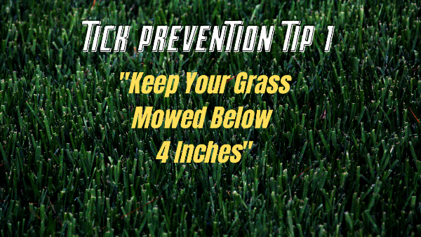 tick prevention mow lawn 4 inches