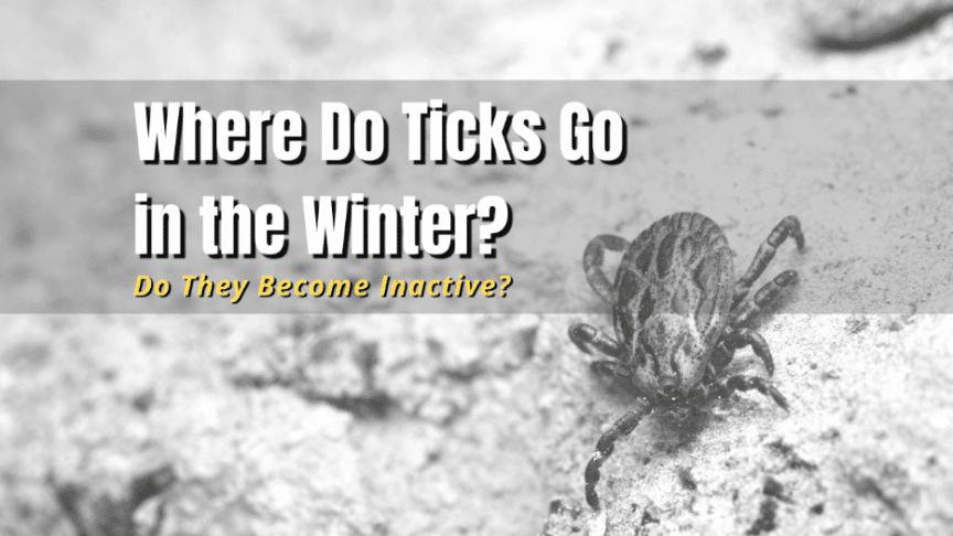 where are ticks in winter